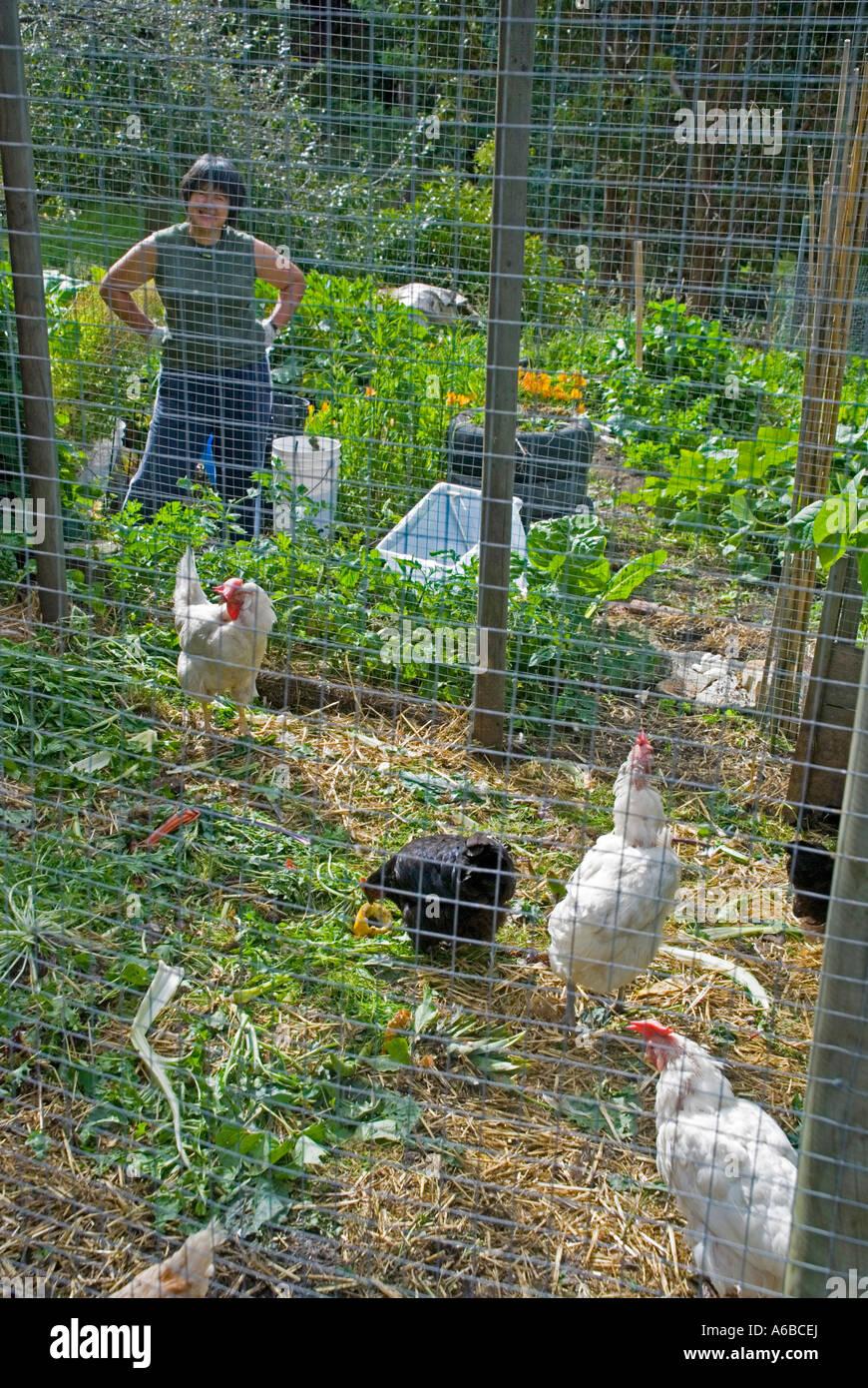 Woman Garden Gardening Hens Chickens Stock Photos & Woman