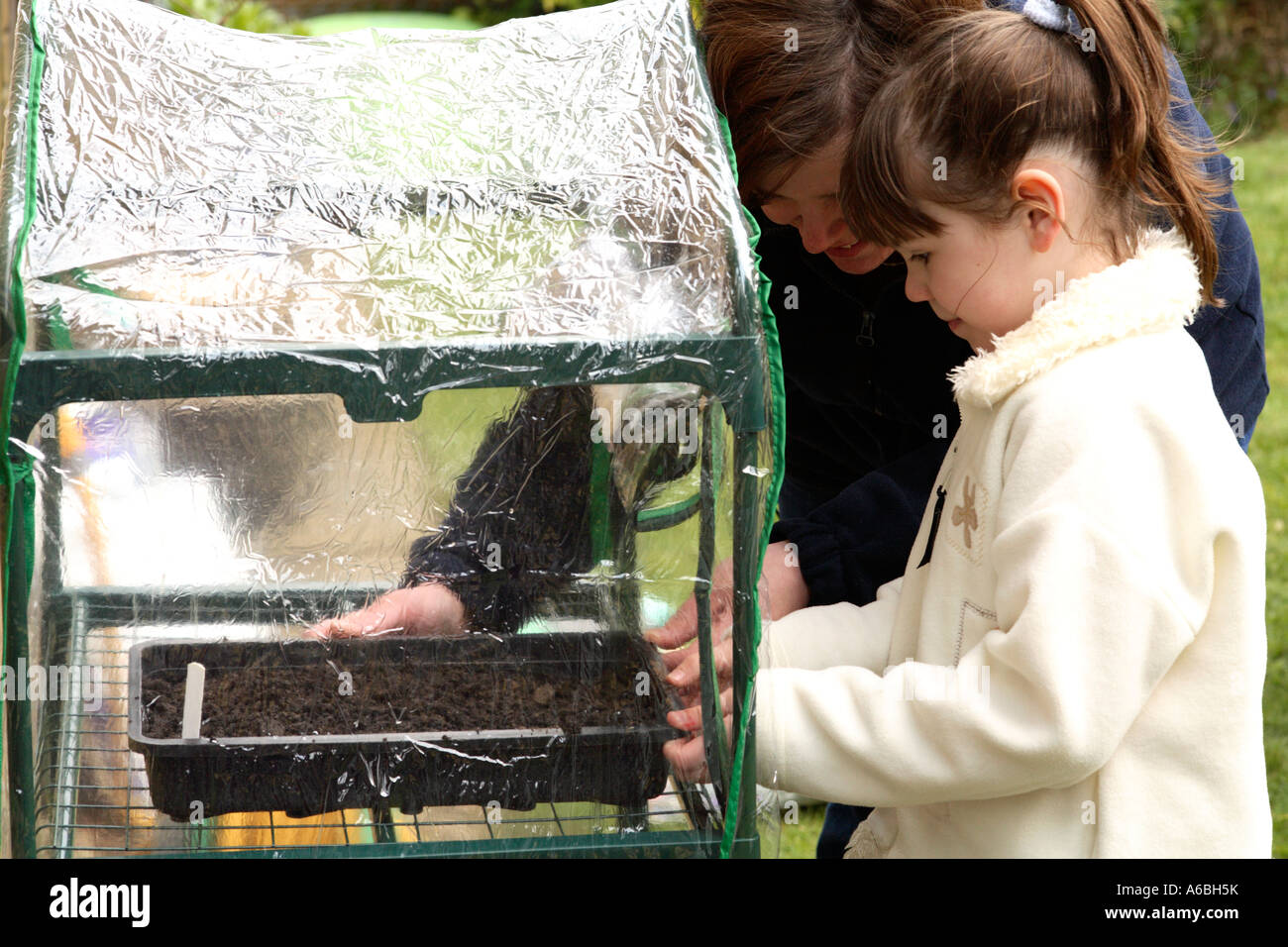 Mother helping her young daughter place planted seed trays into small plastic greenhouse for germination in early spring Stock Photo