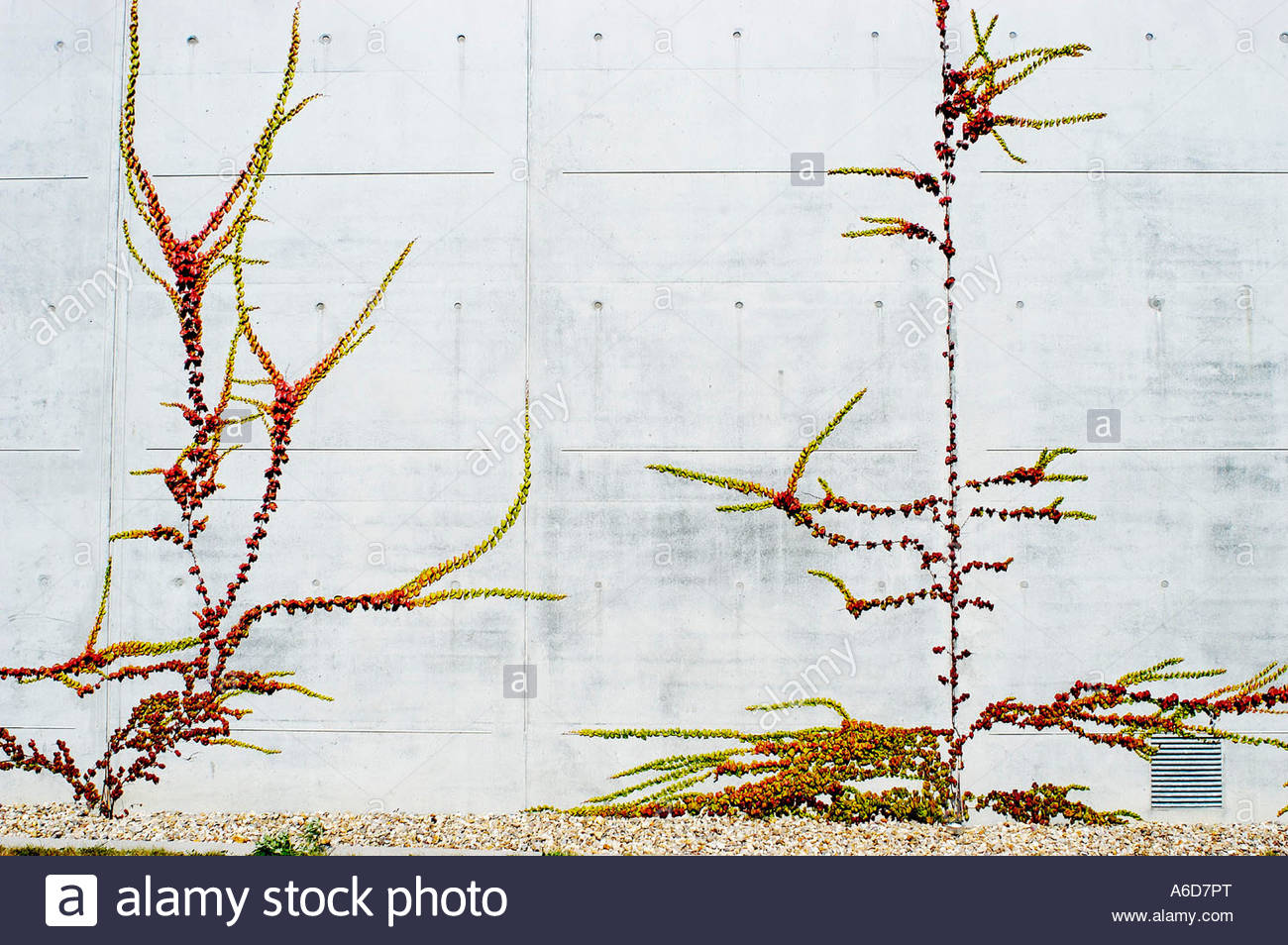 Plants depicted on a wall - Stock Image