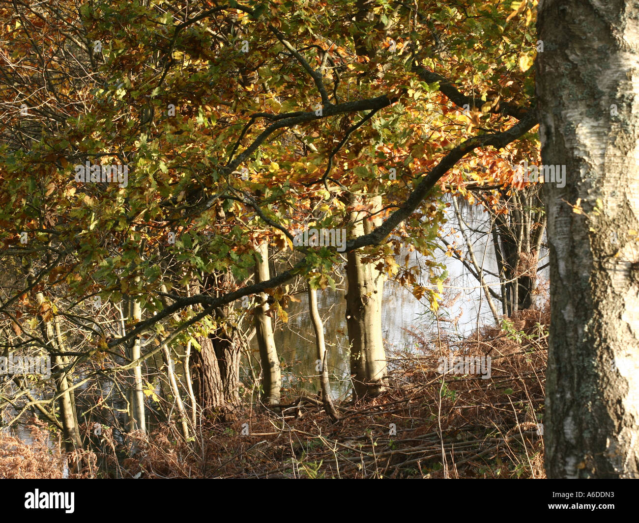 autumn in the countryside in denmark - Stock Image