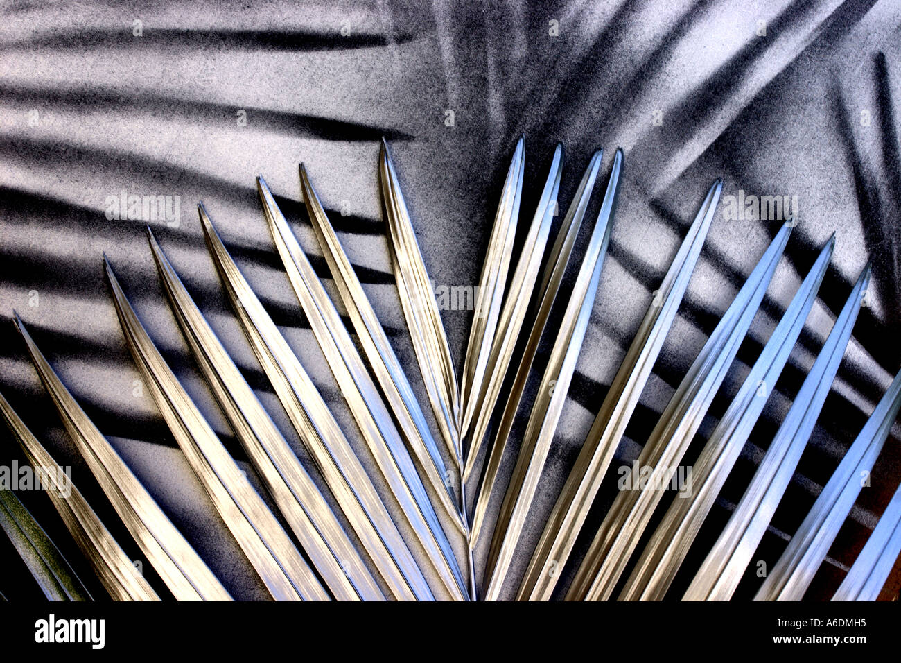 SILVER PALM FROND BAPDB5965 - Stock Image