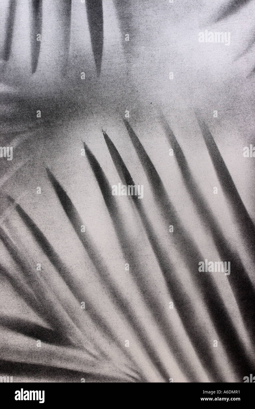 BLACK AND SILVER PALM FROND  BAPDB5974 - Stock Image