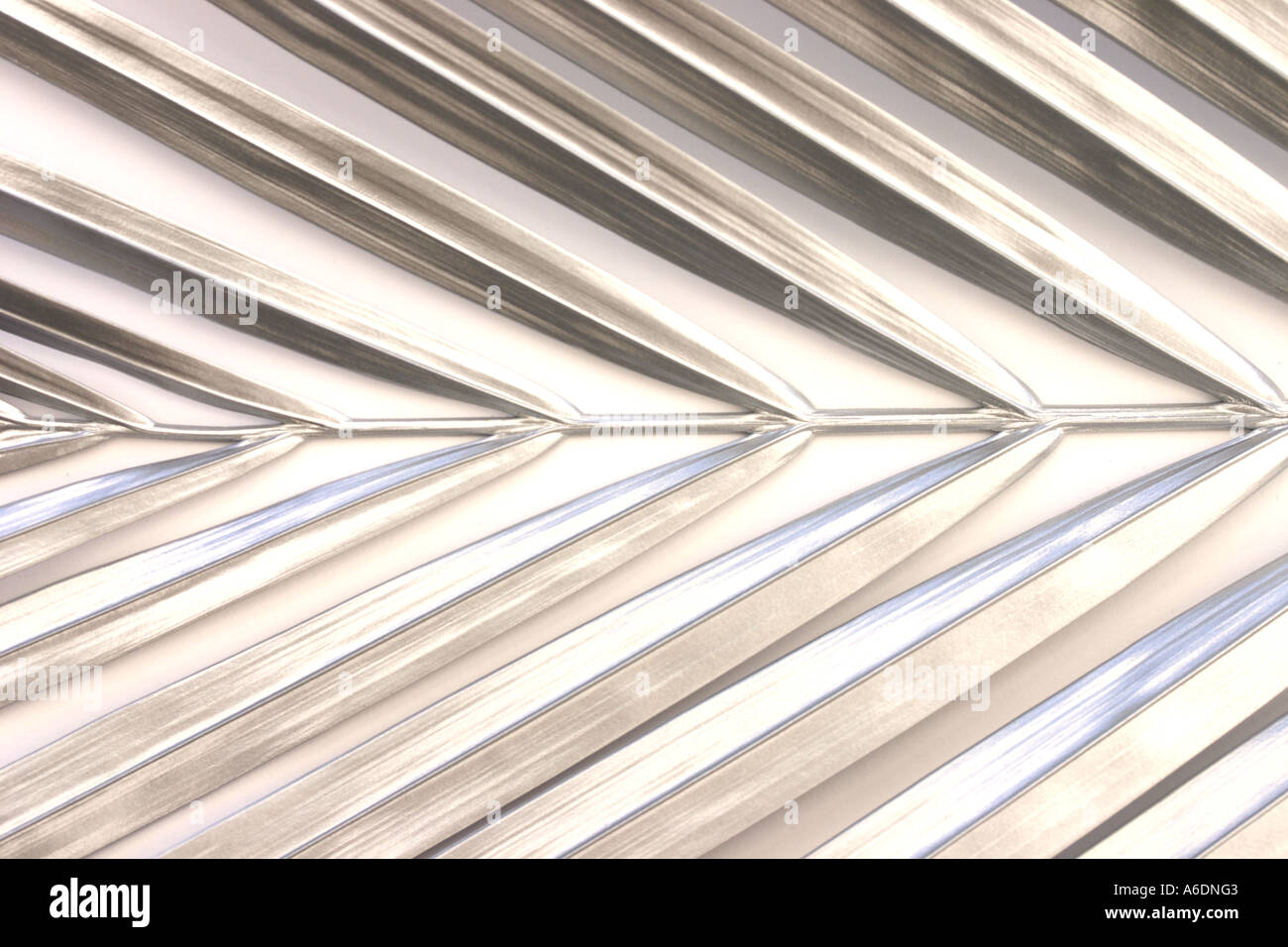 SILVER PALM FROND   WHITE BACKGROUND HORIZONTAL BAPDB5984 - Stock Image