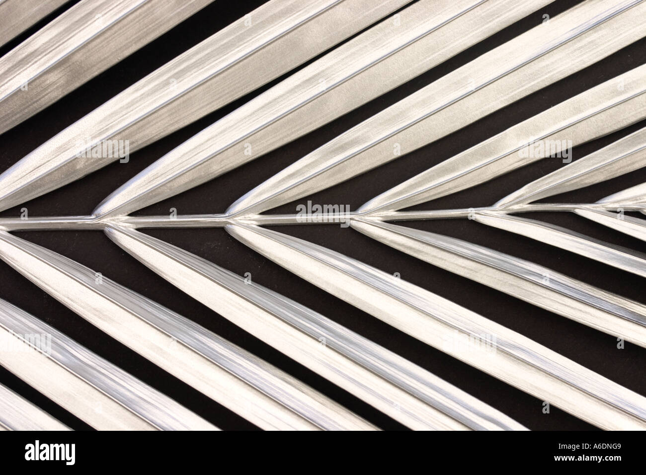 SILVER PALM FROND   BLACK BACKGROUND HORIZONTAL BAPDB5986 - Stock Image