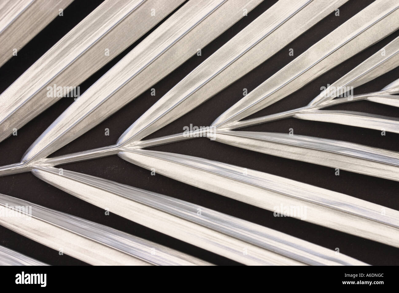 SILVER PALM FROND   BLACK BACKGROUND HORIZONTAL BAPDB5987 - Stock Image