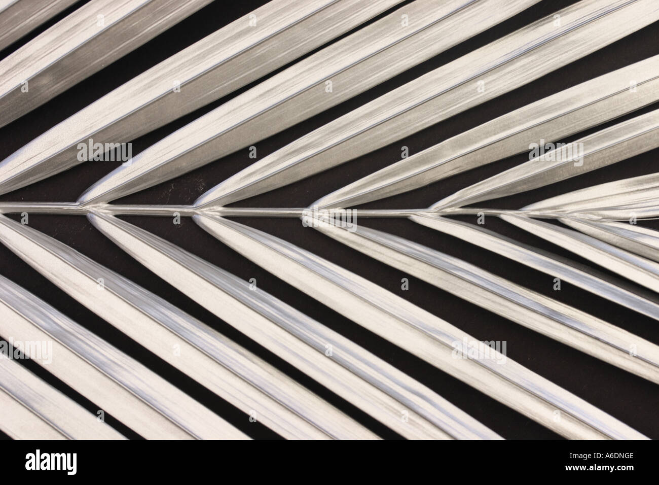 SILVER PALM FROND   BLACK BACKGROUND HORIZONTAL BAPDB5988 - Stock Image