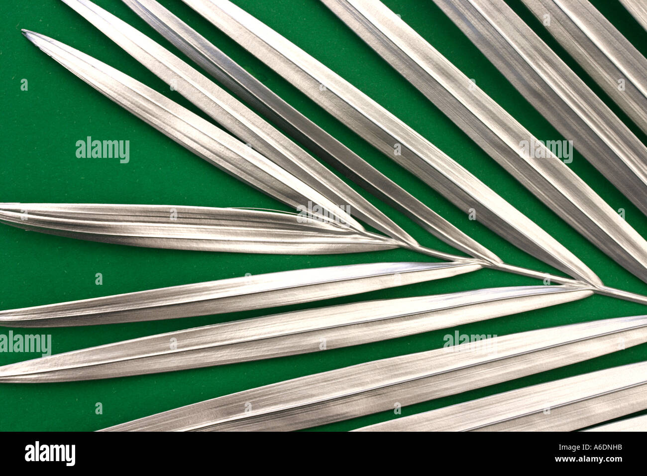 SILVER PALM FROND  GREEN BACKGROUND HORIZONTAL BAPDB5991 - Stock Image