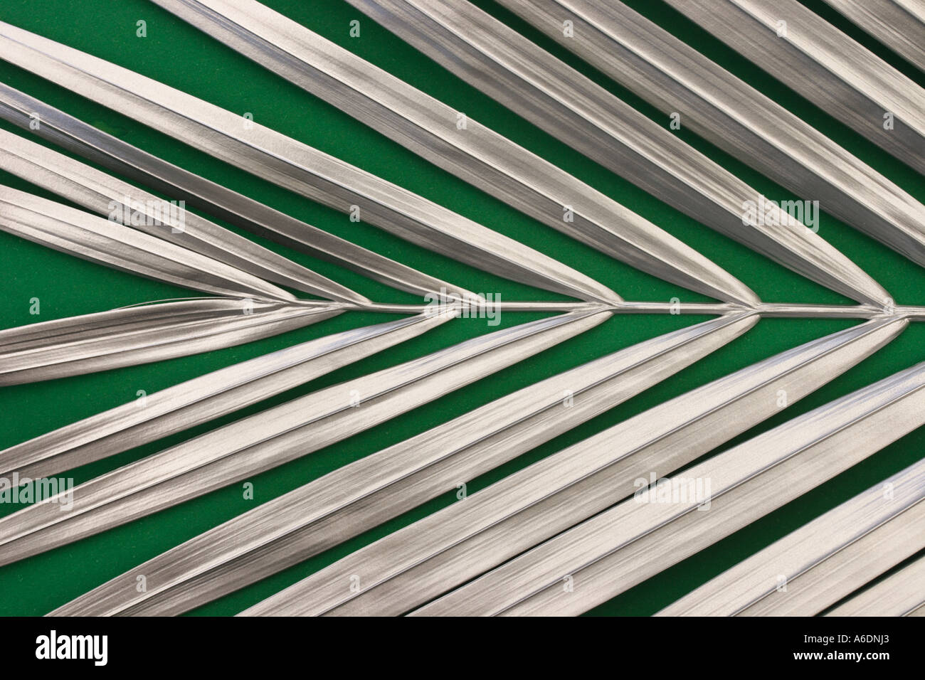 SILVER PALM FROND  GREEN BACKGROUND HORIZONTAL BAPDB5993 - Stock Image