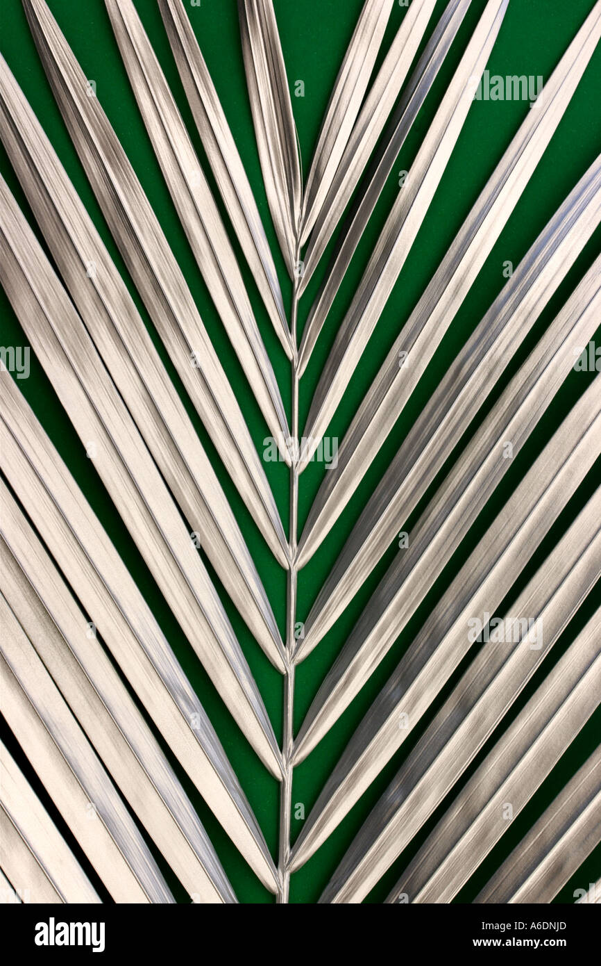 SILVER PALM FROND  GREEN BACKGROUND VERTICAL BAPDB5996 - Stock Image