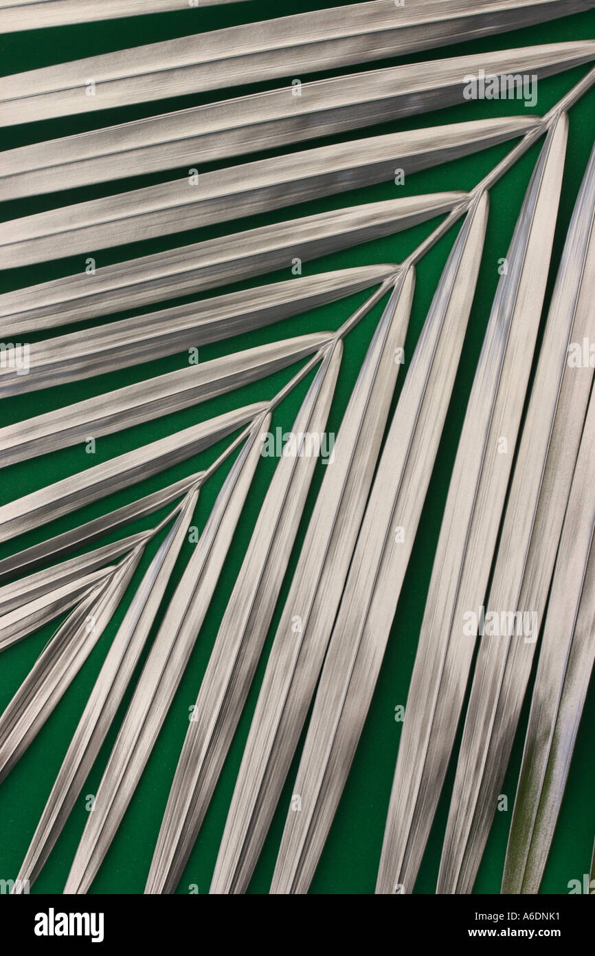 SILVER PALM FROND  GREEN BACKGROUND  VERTICAL BAPDB5997 - Stock Image