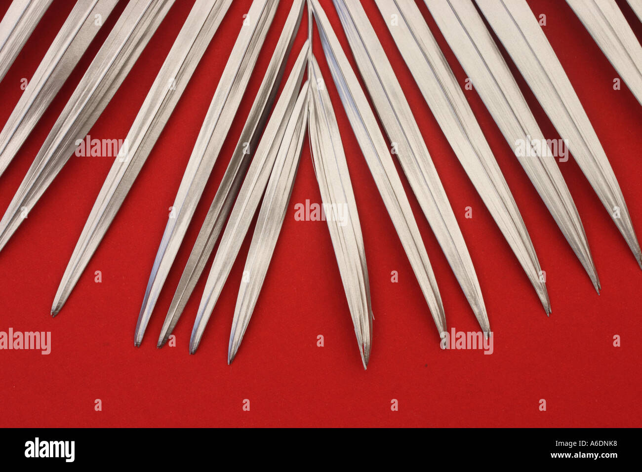 SILVER PALM FROND  RED BACKGROUND HORIZONTAL BAPDB5999 - Stock Image