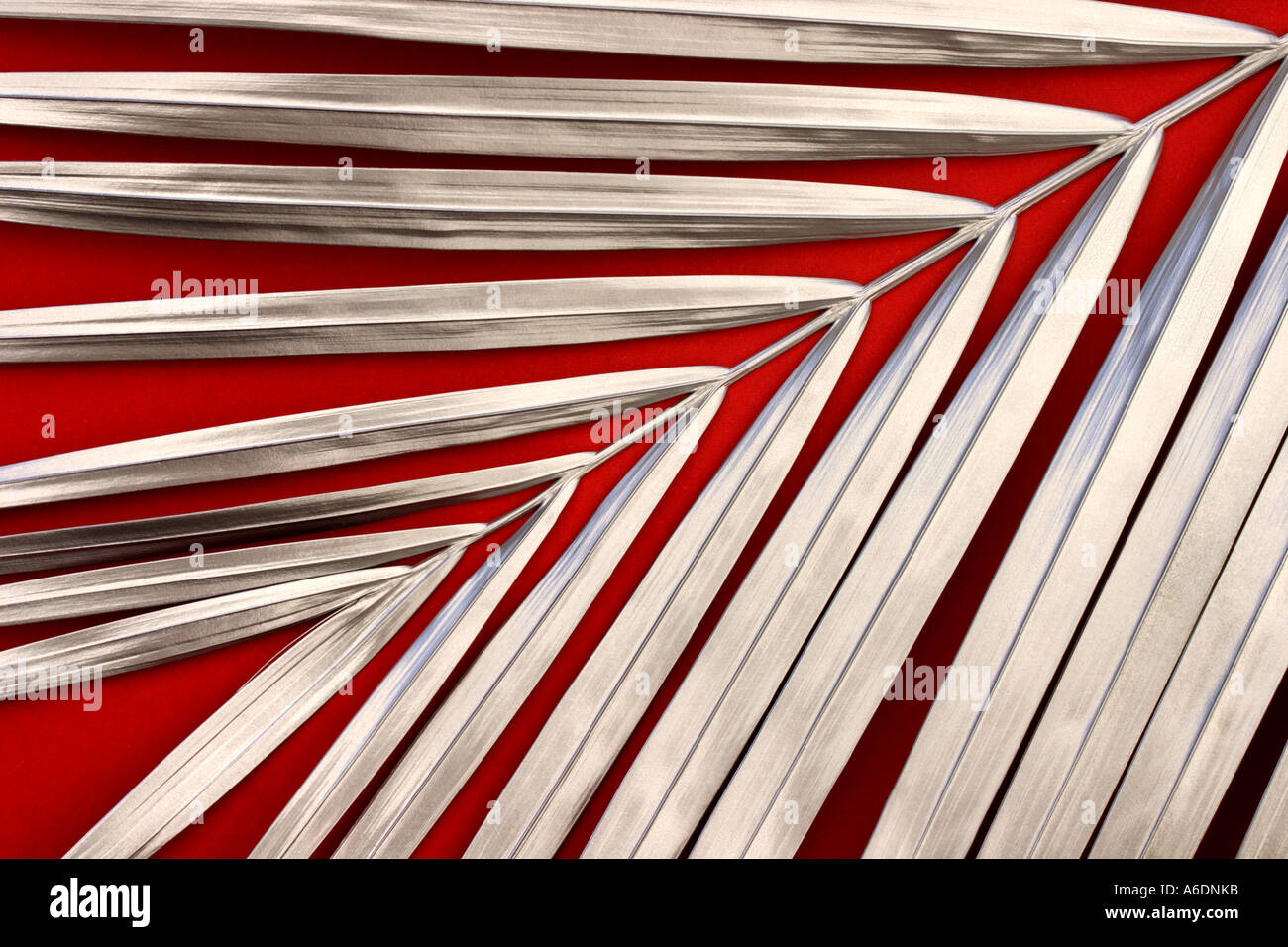SILVER PALM FROND  RED BACKGROUND HORIZONTAL BAPDB6000 - Stock Image