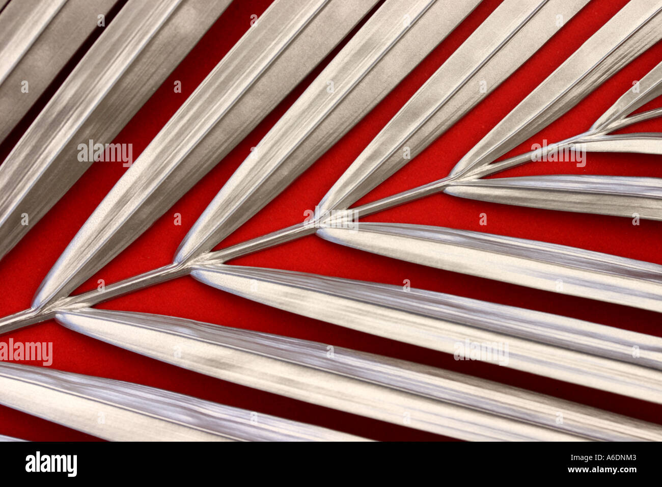 SILVER PALM FROND  RED BACKGROUND HORIZONTAL BAPDB6002 - Stock Image