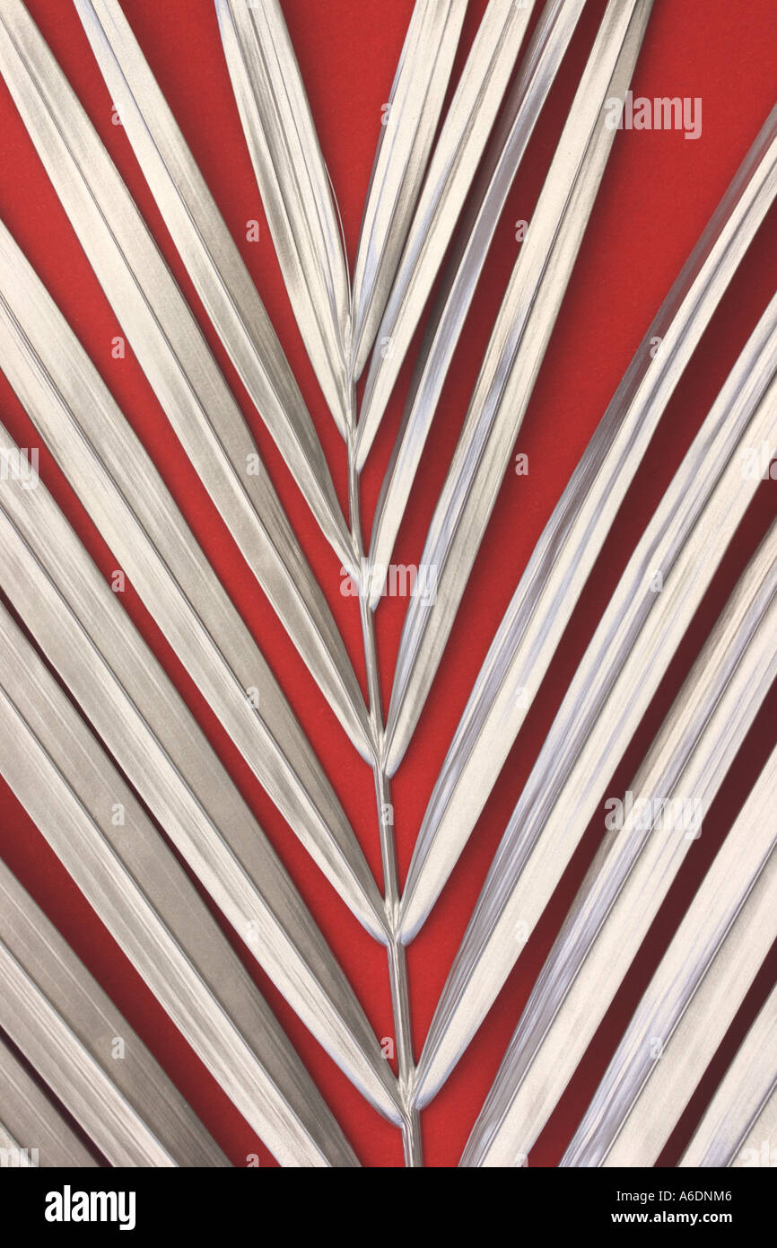 SILVER PALM FROND RED BACKGROUND  BAPDB 6003 - Stock Image