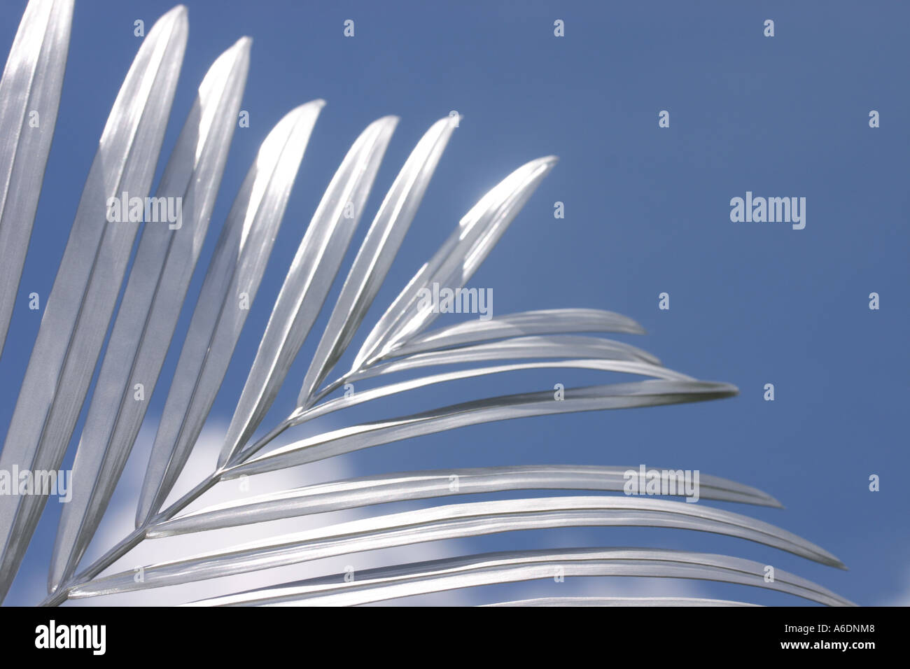 SILVER PALM FROND BLUE BACKGROUND  BAPDB 6004 - Stock Image