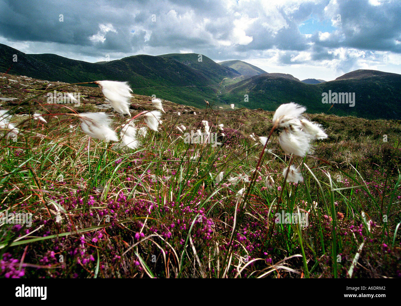 Mourne Mountains, Co. Down, Northern Ireland - Stock Image