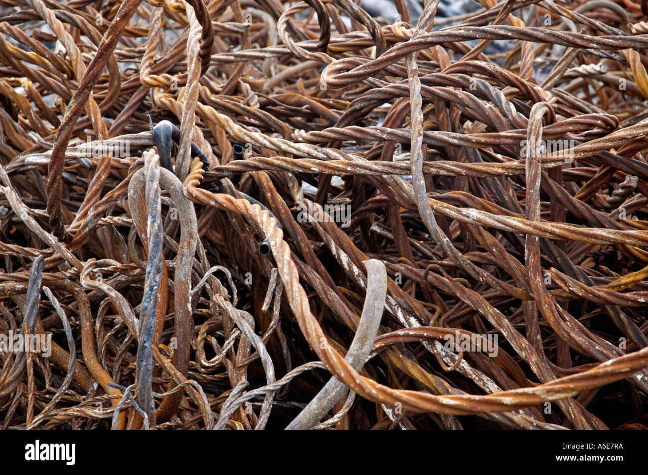 Iron scrap on the compound of the former coking plant Hansa, Westfaelisches industry museum, route of the industry culture - Stock Image