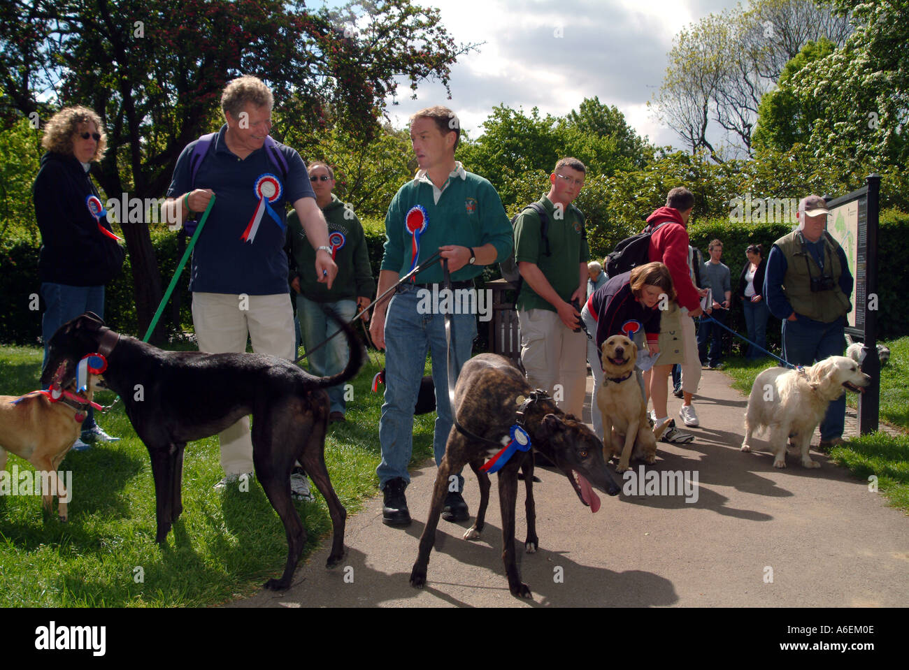 GROUP OF DOG OWNERS IN CHARITY ORGANIZED WALK IN THE PARK - Stock Image