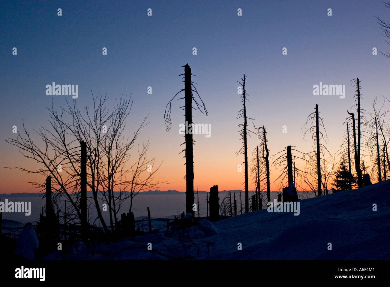 Consequences of acid rain in a fores Stock Photo: 6604352 - Alamy