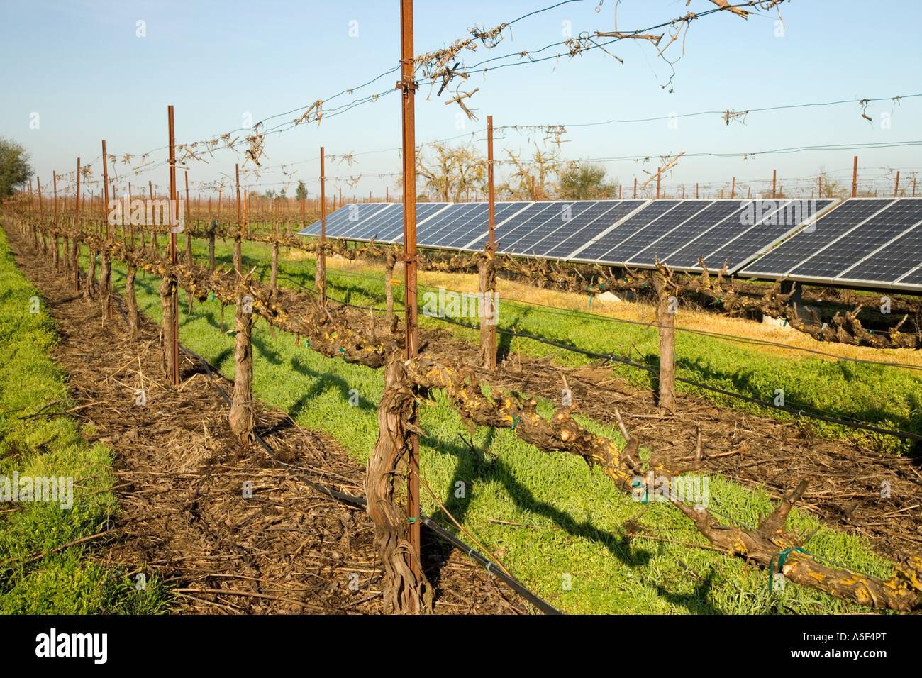 Solar panels in dormant vineyard, Califorrnia - Stock Image