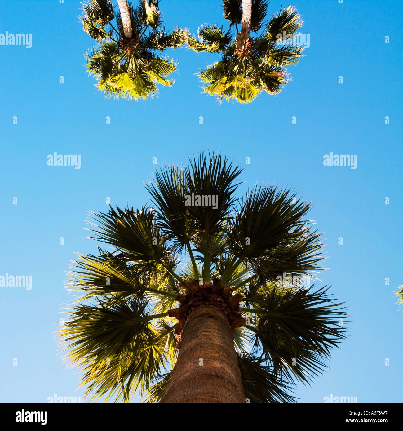 palm top trio - Stock Image