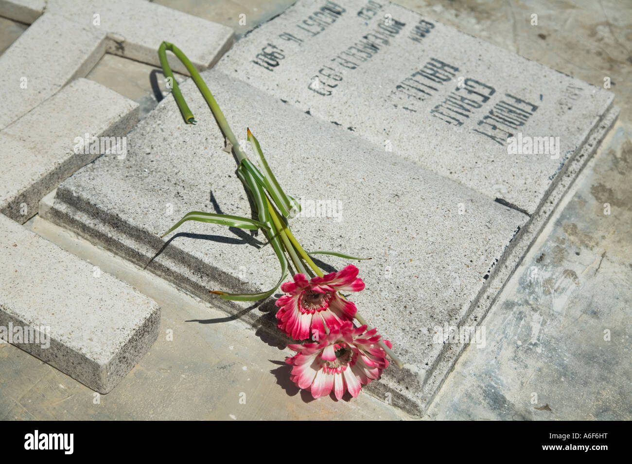 Laid Flowers Stock Photos & Laid Flowers Stock Images - Alamy