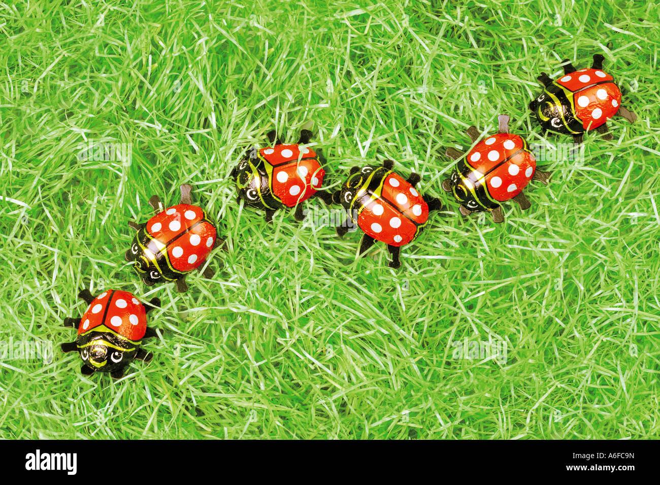 chocolate ladybugs ladybirds in a row Marienkäfer aus Schokolade in einer Reihe im Gras - Stock Image