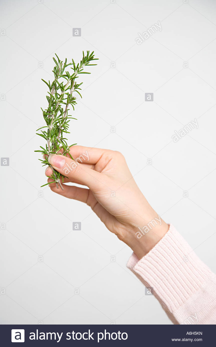 Person with sprig of rosemary - Stock Image