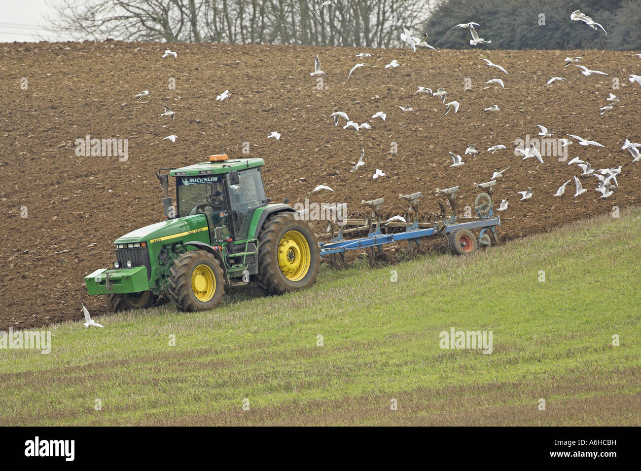 Tractor plough and gulls in springtime Norfolk UK - Stock Image
