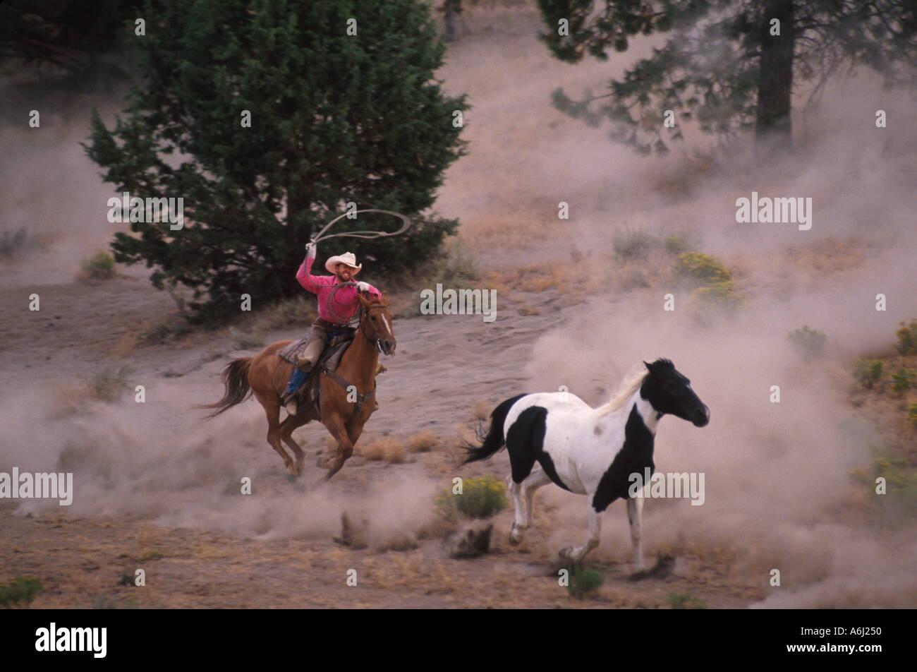 Cowboy Roping Wild Horse - Stock Image