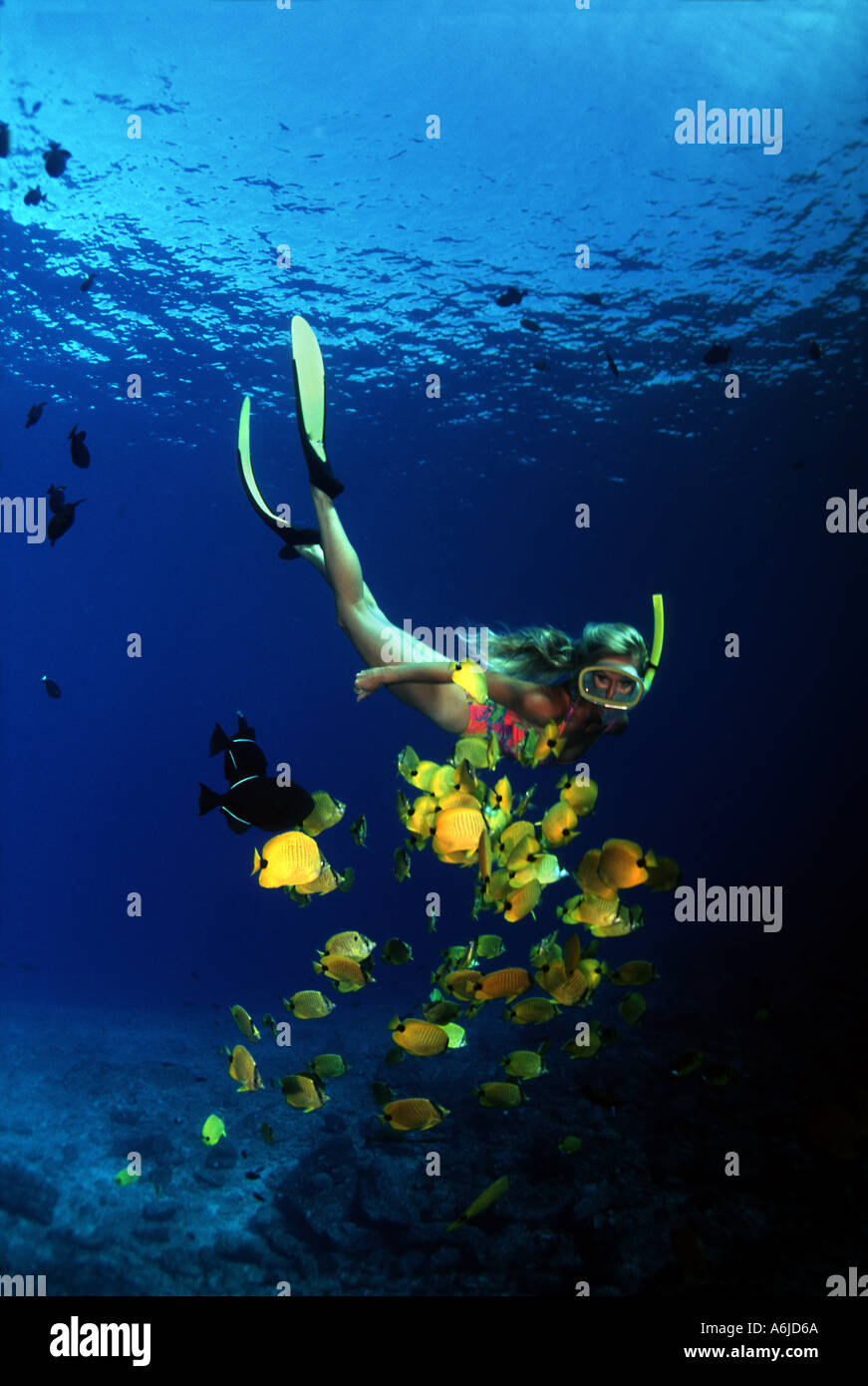 A WOMAN FREE DIVING UNDERWATER WITH BUTTERFLYFISH. HAWAII