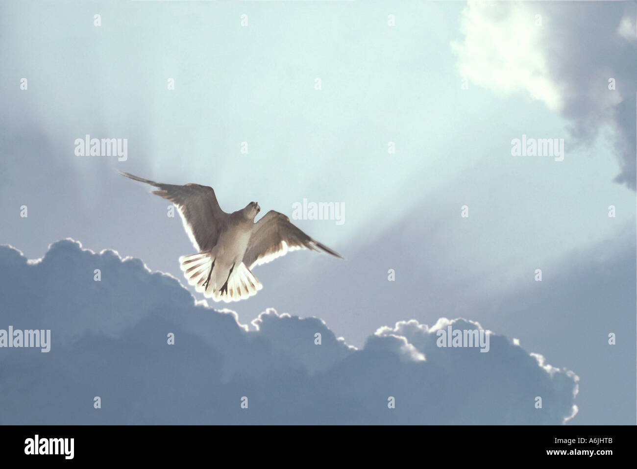Gull hovering in sky with sun rays and clouds behind - Stock Image
