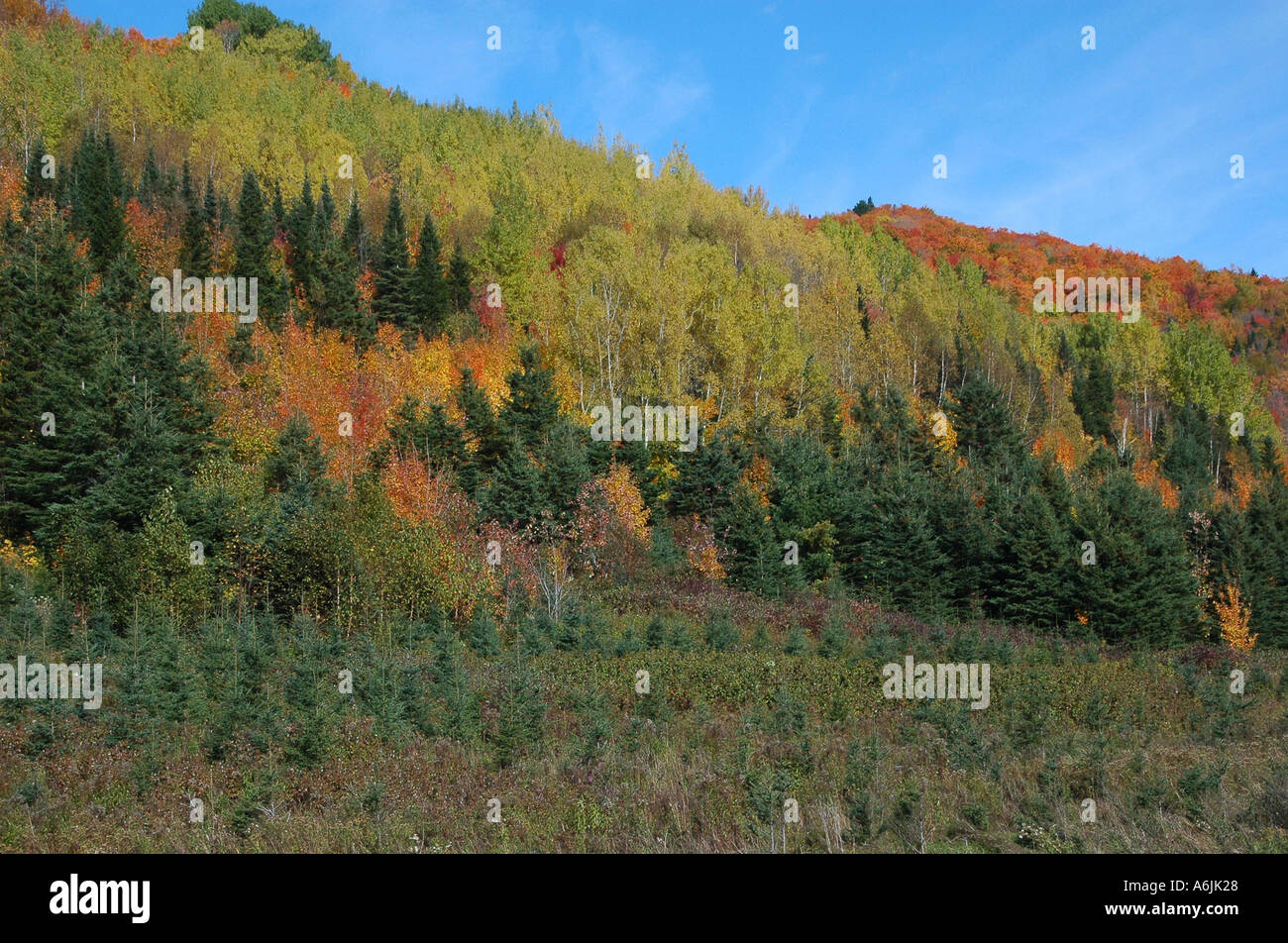 Fall in the Appalachians Gaspesie Quebec - Stock Image