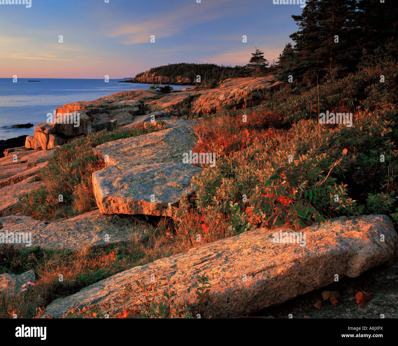 Acadia National Park ME Morning light on granite boulders and berry bushes on the Otter Cliffs near Newport Bay Stock Photo