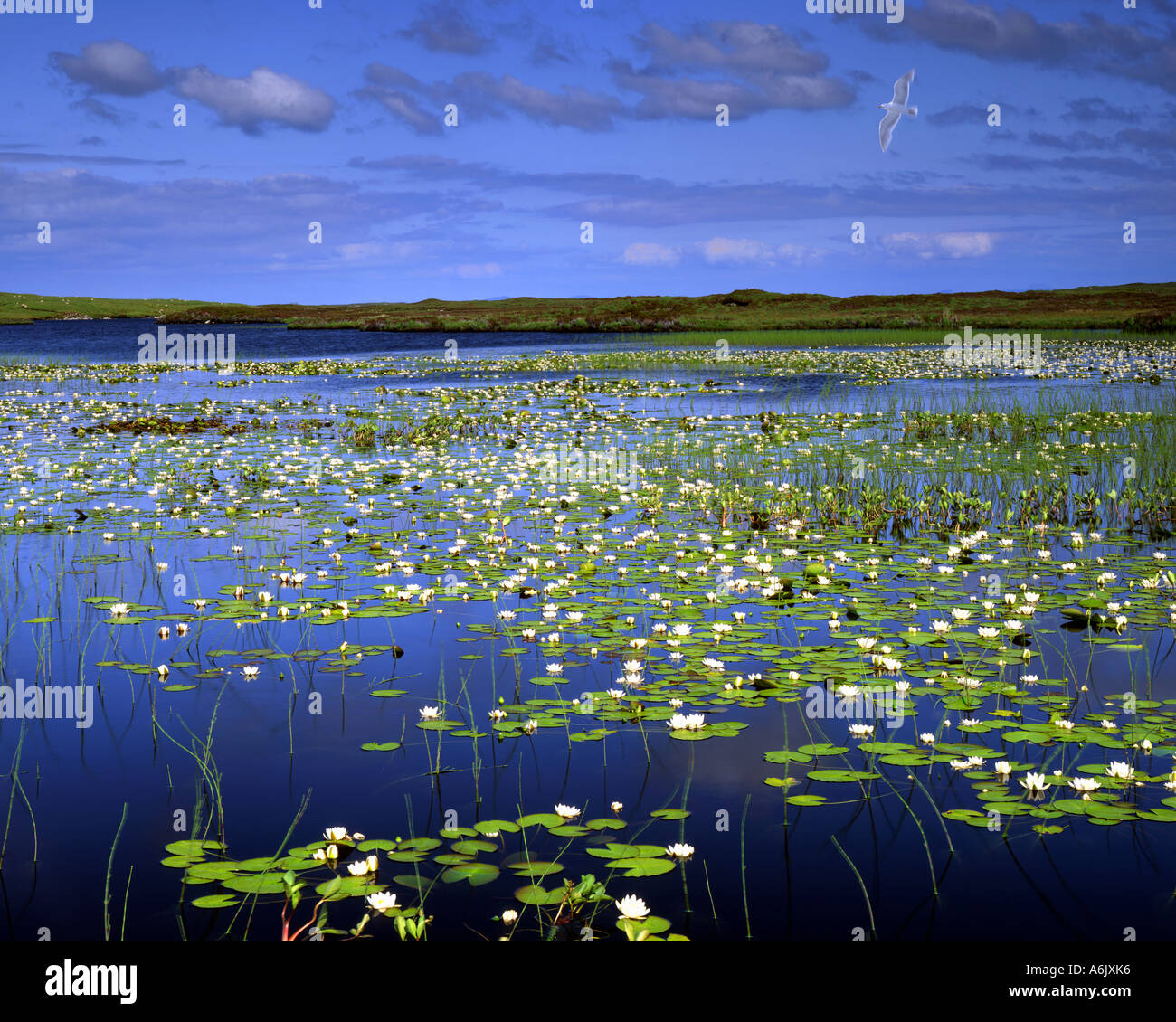 GB - SCOTLAND:  Loch Olavat on Benbecula in the Outer Hebrides - Stock Image