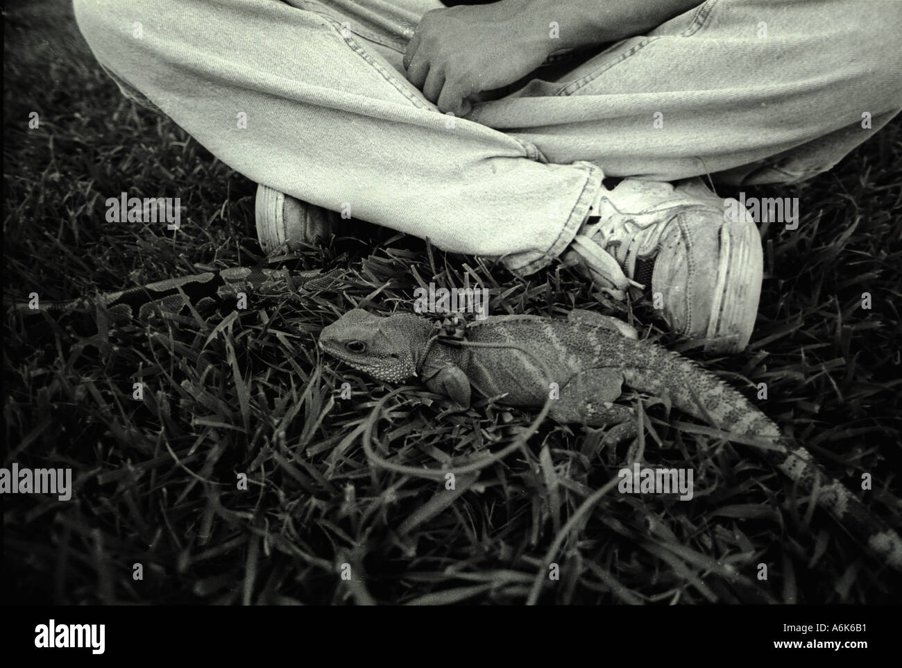 Young man and his pet lizard with a leash in a park. generation x man hangs out in a park with his pet monitor lizard - Stock Image