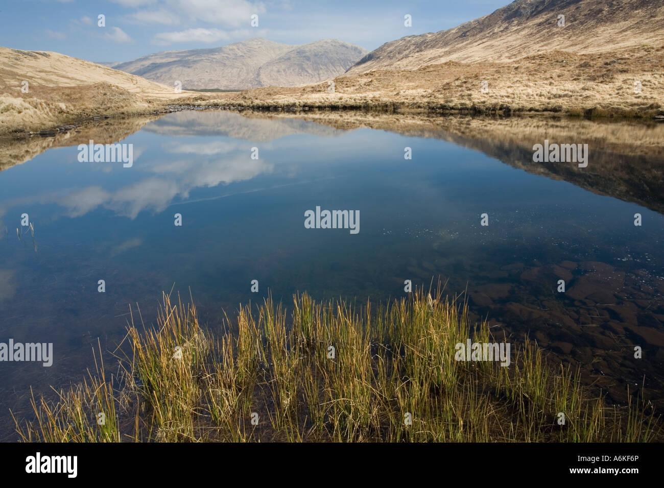 Hillside lochen, Isle of Mull, Scotland. - Stock Image