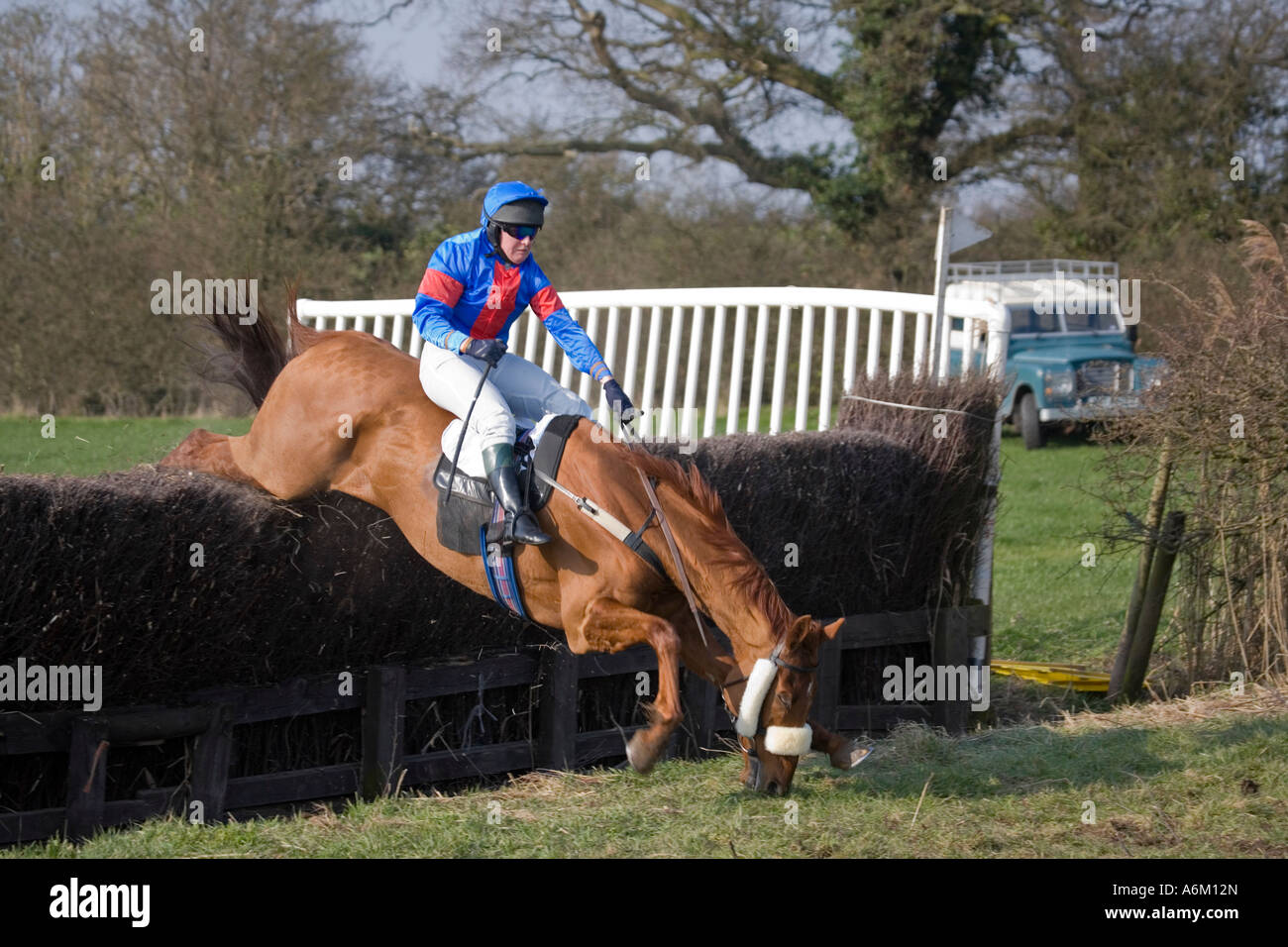 Jockey About To Fall As Horse Fails To Clear Jump At Alpraham Stock Photo Alamy