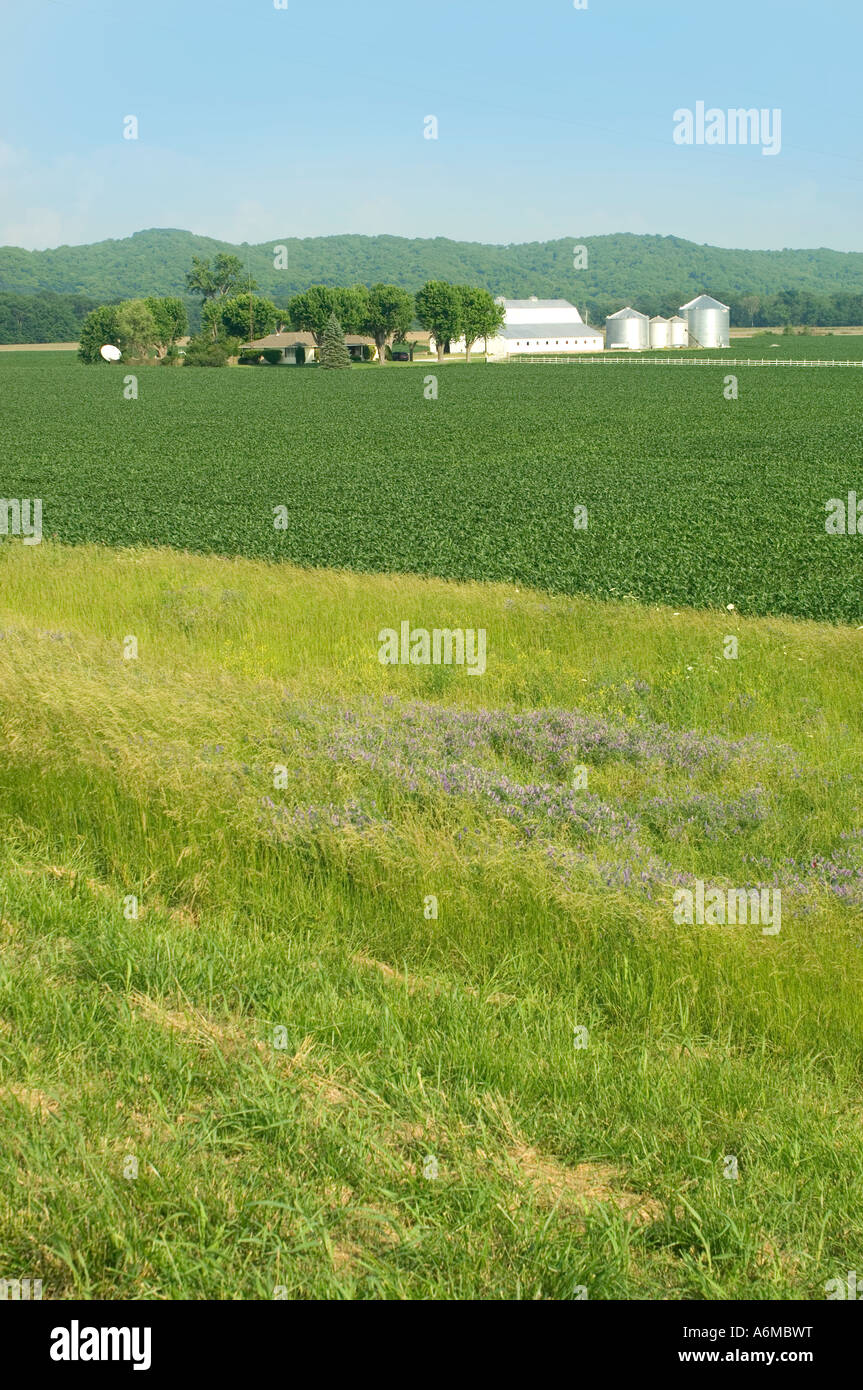 Field of corn and farmstead in southern Illinois - Stock Image