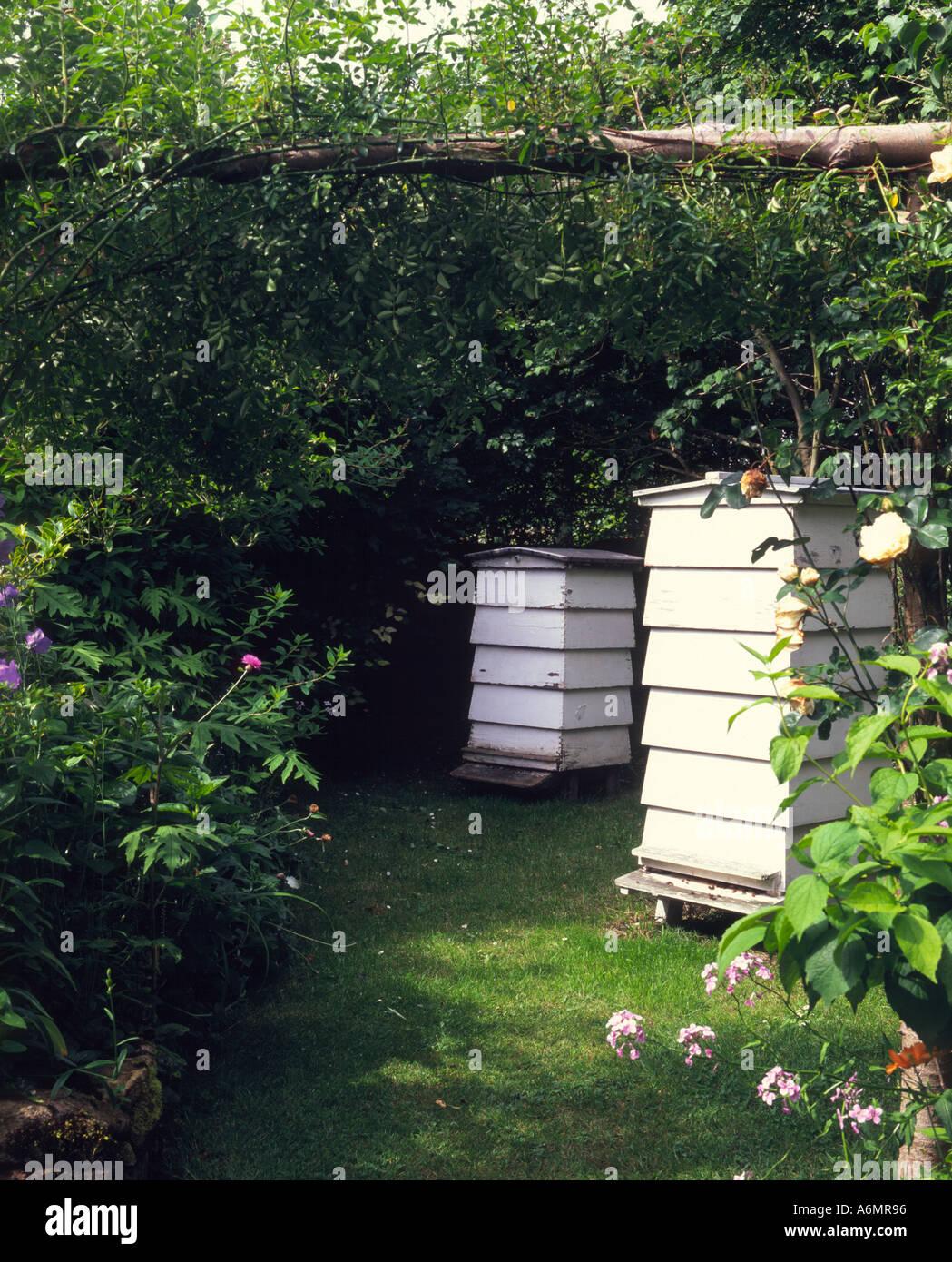 Beehives set in corner of garden - Stock Image