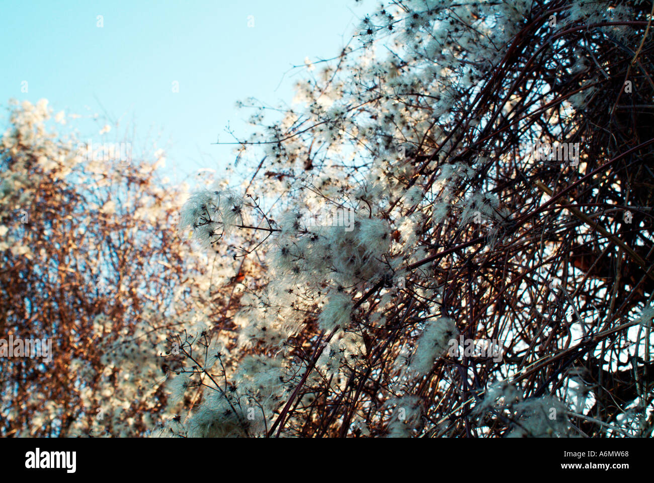 Winter Texture - Stock Image