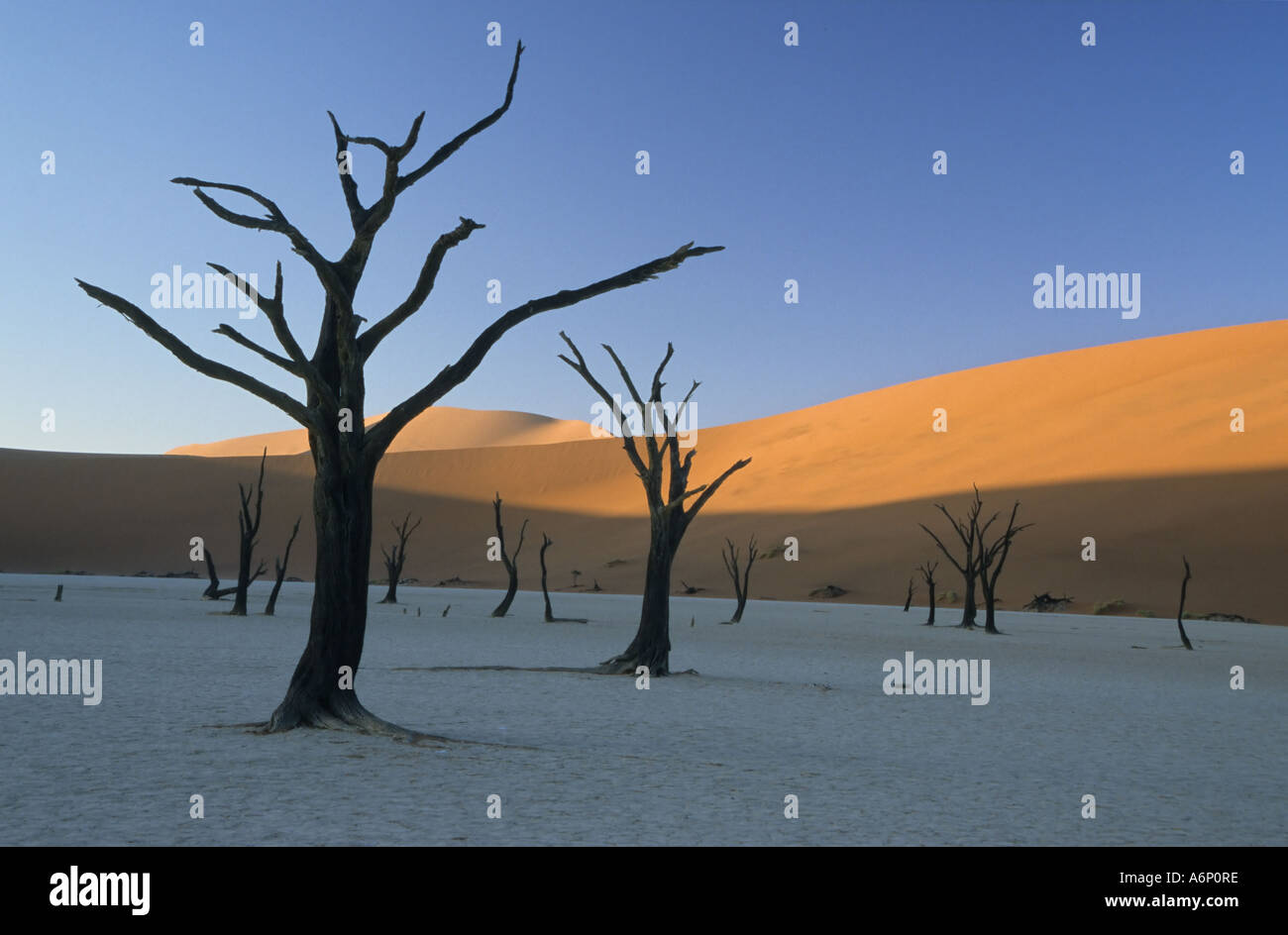 The 900 year old dead trees of the Deadvlei pan. Dead Vlei, Namib-Naukluft National Park, Namibia, Africa - Stock Image