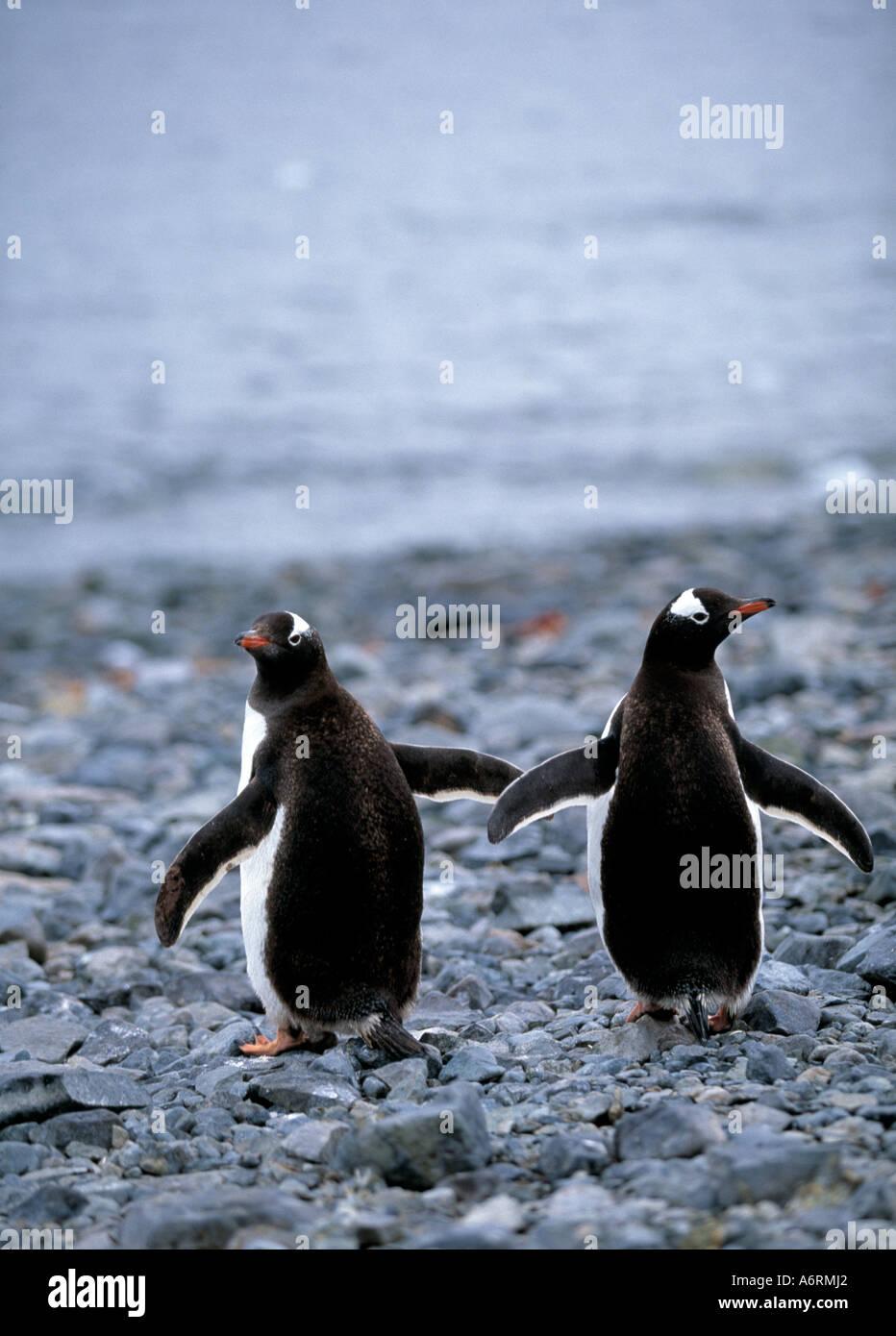 antartic, antartica, ice continent,  deep south, southern hemisphere, polar, - Stock Image
