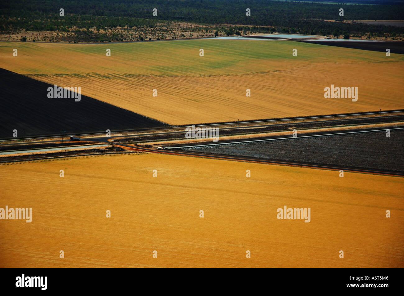 wheat field Central Queensland Australia - Stock Image