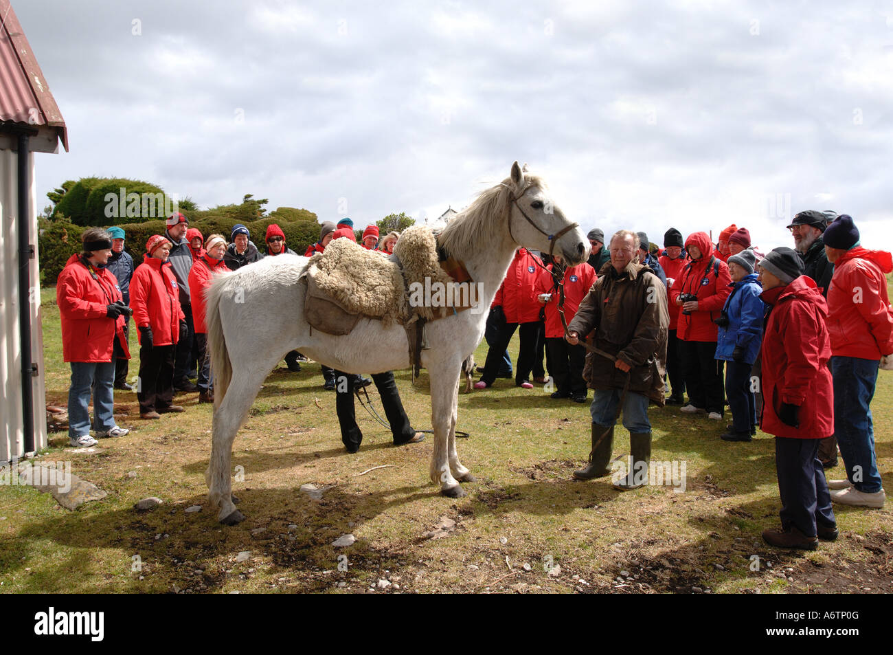 Tourist from a cruise ship watch a display of traditional horse riding at Long Island Farm, Falkland Islands - Stock Image