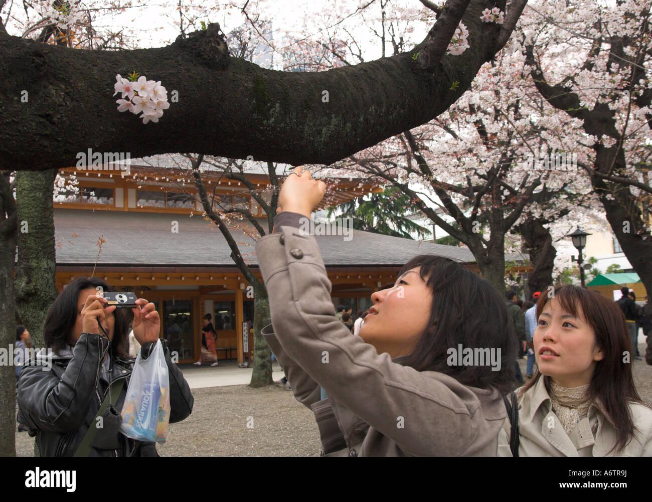 Japan Central Honshu Tokyo Yasukuni jinja Sakura cherry blossom visitors talking photographs of cherry flowers - Stock Image