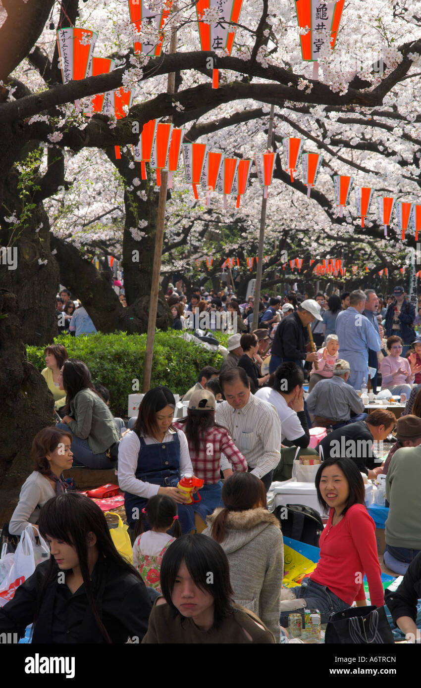 Japan Central Honshu Tokyo Ueno koen Sakura cherry Blossom groups of young people seating together under trees - Stock Image
