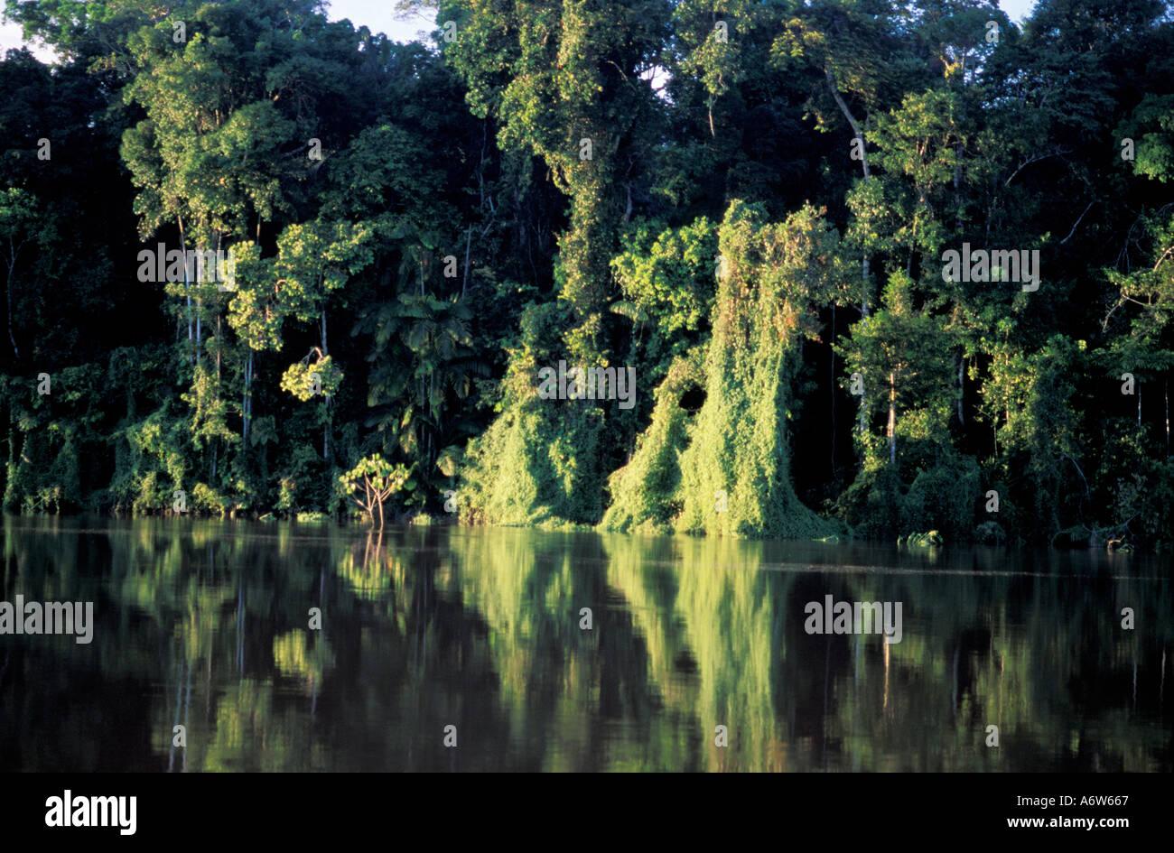 Amazon rainforest Brazil Preserved river margin APP Áea de Preservação Permanente Permanent preservation area Stock Photo