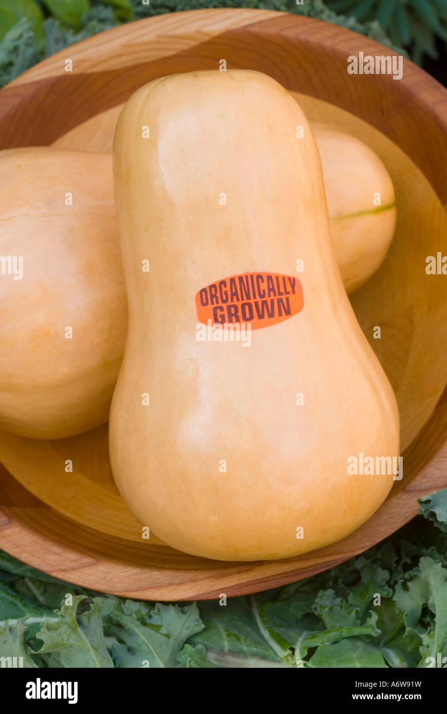 Organic Butternut squashes vegetables labeled labelled with sign organically grown harvested in wooden bowl. Cucurbita Stock Photo