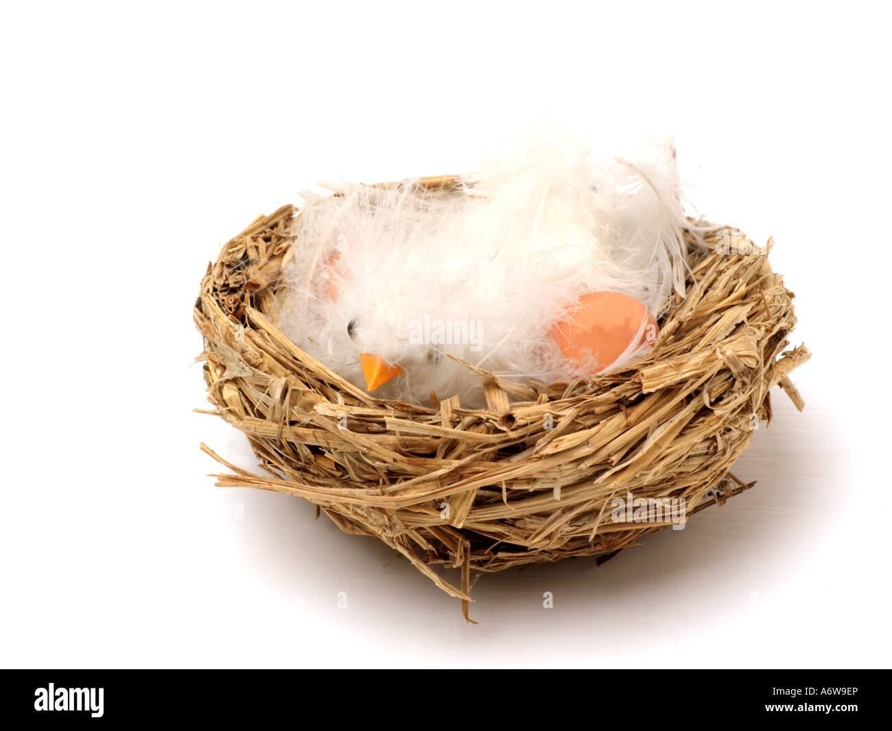 Chick in an Nest - Stock Image